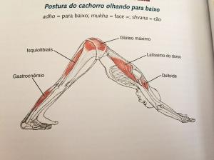 anatomiaisquios